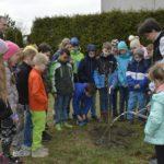 Sadzenie drzewa SP nr 9 TG- Dzień Ziemi
